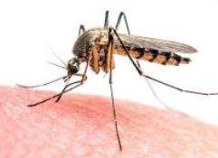 mosquitera noflystore